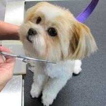 Ищете салон для собак (Львов)? Обращайтесь к профессиональным мастерам!