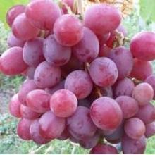 Купити саджанці винограду, Україна (Київ, Львів)