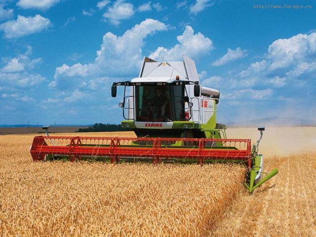 Пропонуємо послуги зі збирання кукурудзи