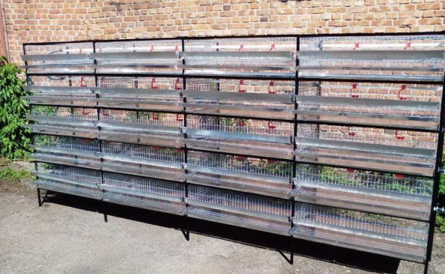 П'ятиярусні клітки для перепелів за 13 950 грн