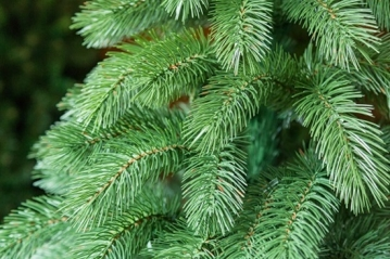 Искусственная литая елка - разумный выбор для вашего дома!