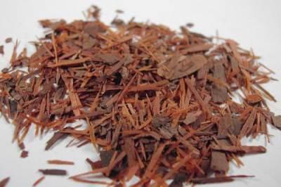 Кора муравьиного дерева защитит от инфекций!