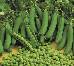 Купити горох насіння оптом