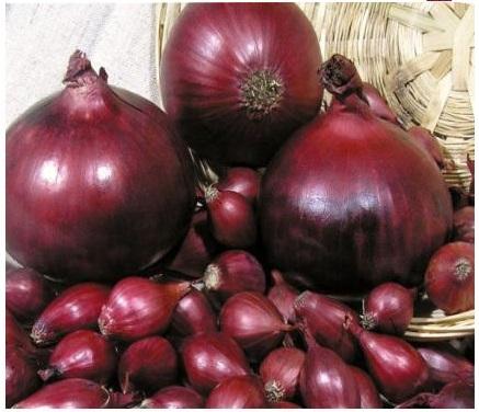 Овощные семена купить