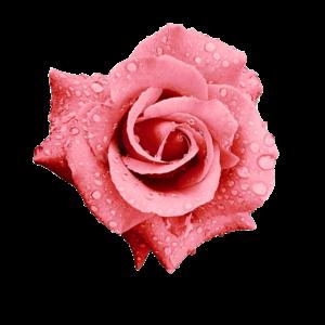 Якісна аюрведична косметика: трояндова вода для бездоганної шкіри