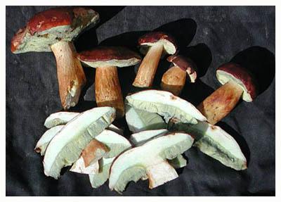 Замороженные маслята, подберезовики, белые грибы купить оптом
