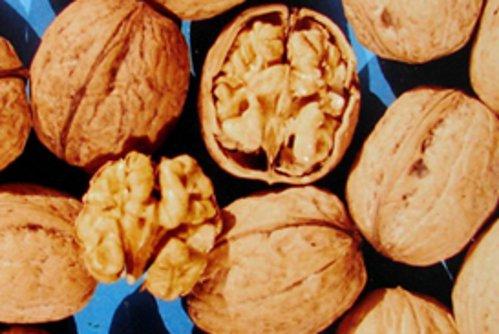 Купить саженцы ореха Козаку