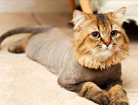 Грумер для кошек во Львове