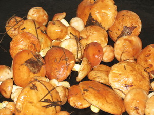 Свіжі тазаморожені лисички, маслюки, опеньки купити оптом недорого