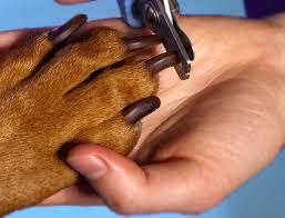 Стрижка когтей у собак от профессионалов