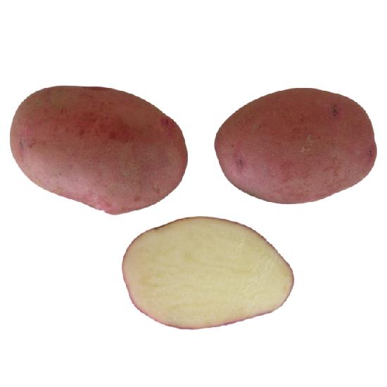 Сортовая картошка купить недорого с доставкой