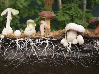 Недорого купить мицелий грибов в интернет-магазине