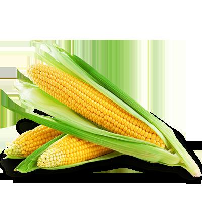 Купитипосівний матеріал кукурудзи якість найкраща