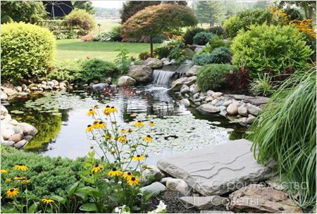 Замовитиландшафтний дизайн садової ділянки недорого