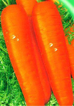 Насіння моркви купити в інтернет-магазині недорого