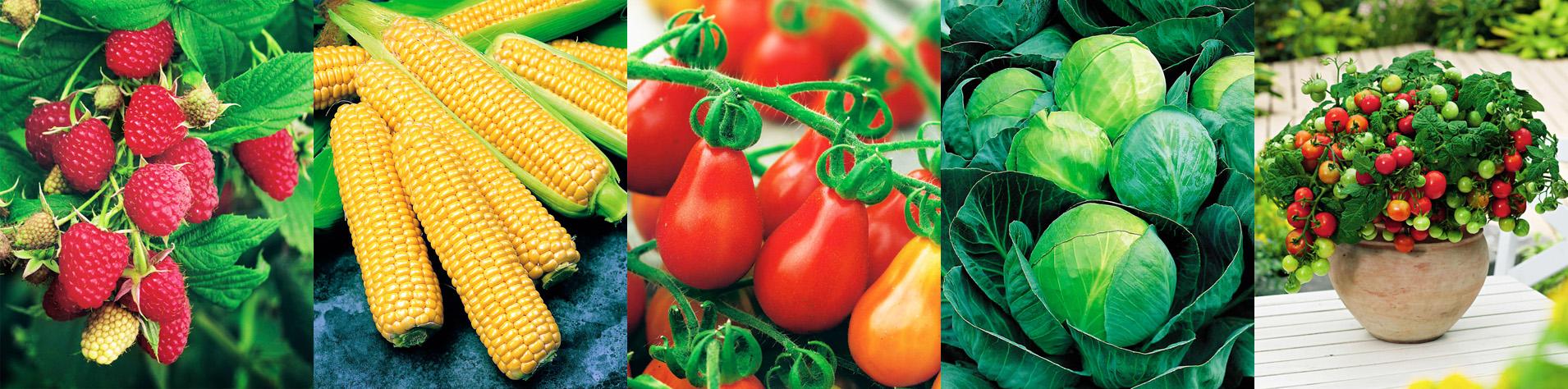 Пакетики для насіння оптом придбати за доступною ціною