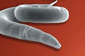 Протигельмінтні препарати для захисту від паразитів