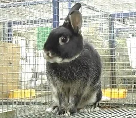 Купить клетки для кроликов недорого