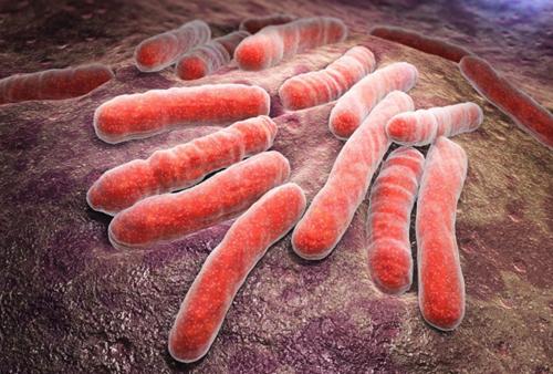 Таблетки від паразитів широкого спектру дії замовити недорого