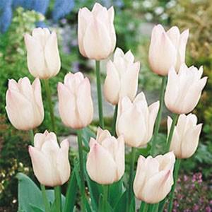 Багаторічні декоративні рослини для саду купити недорого