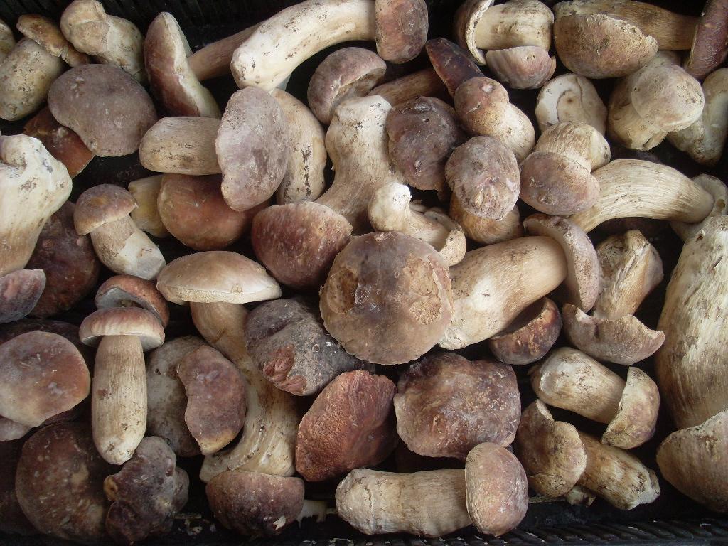 Заморозка белых грибов – выгодное решение!