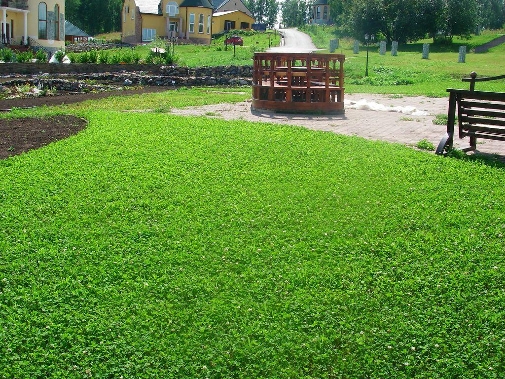 Насіння трави газонної купитинедорого
