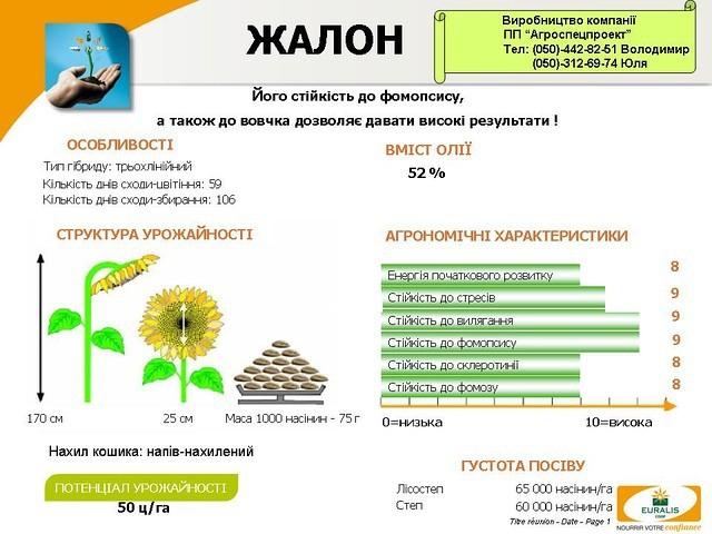 Подсолнечник Жалон покупайте выгодно в ПП Агроспецпроект!