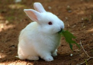 Приобретите кроликов великанов за низкой ценой