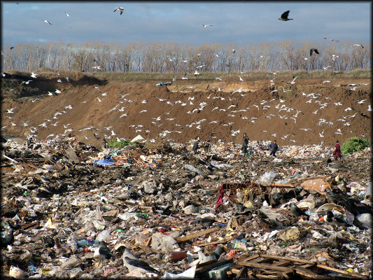 Мы пропагандируем сортировки мусора для дальнейшей переработки