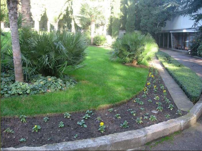 Хотите идеальный газон? Приобретите качественные семена!