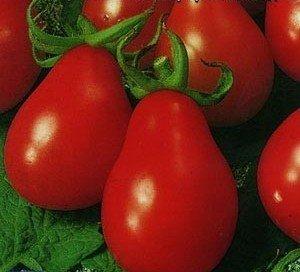Семена оригинального томата высокого качества в наличии