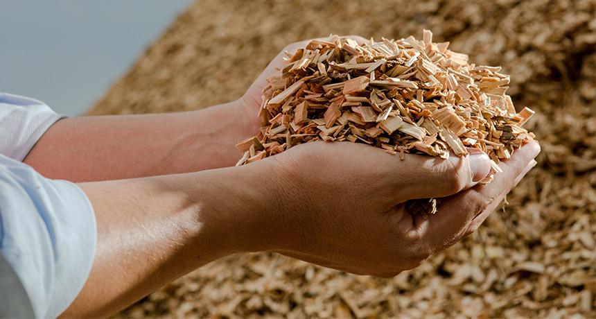 Сушка деревної тріски недорого замовлення через інтернет з доставкою або самовивіз