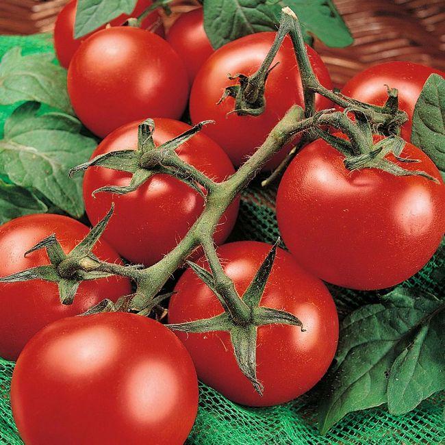 Професійне насіння смачних томатів доступне для замовлення