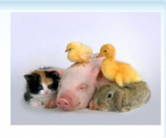 Предлагаем антибиотики для животных по умеренным ценам