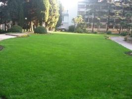 Багаторічне насіння газонних трав: купити в Україні