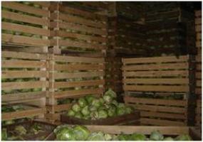 Хранение овощей долгое время - в вашем супермаркете!