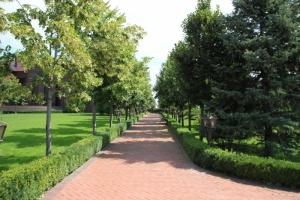 Продаємо декоративні дерева для озеленення