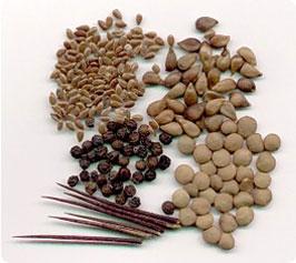 Насіння кормових трав: купити в Україні