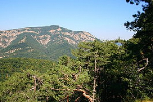 Предлагаем широкий ассортимент крымских елок
