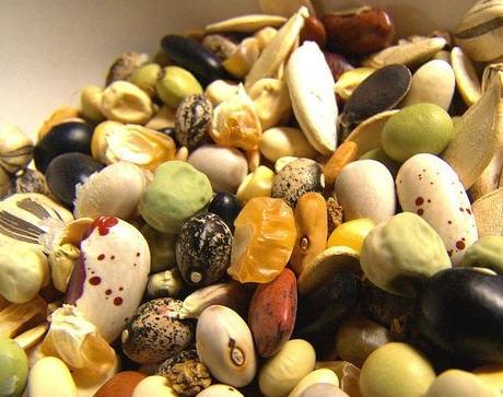 Пропонуємо купити насіння овочів оптом світових селекціонерів