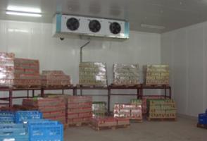 Выполняем строительство холодильных камер из качественных материалов