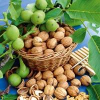 Продаем саженцы ореха грецкого