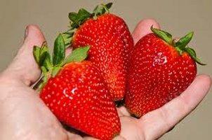 Продаємо розсаду полуниці Альба. Доставка по всій Україні