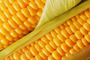 Машинная переработка зерна, сепарация кукурузы и семян