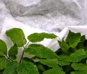 Надійний захист від заморозків: агроволокно