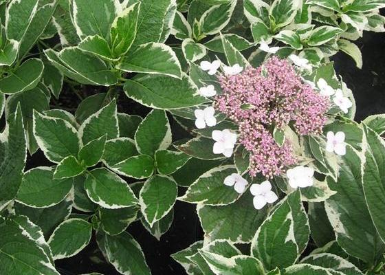 Рослини в горщину 9х9х9 рослини