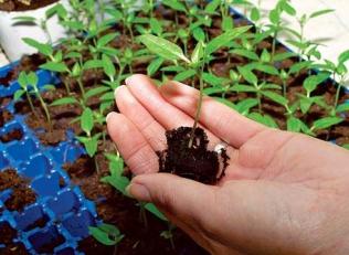 Хочете отримати хороший врожай? Замовляйте наші касети для розсади!