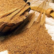Ефективне очищення зерна і всіх видів насіння сепаратором ІСМ