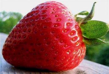 Хочете купити розсаду полуниці оптом? Тоді ЛПХ Павлівські до Ваших послуг!