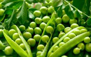 Продається насіння гороху хорошої якості